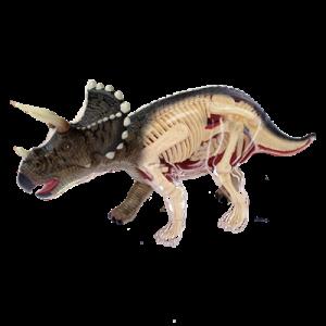 Анатомическая модель Динозавр Трицератопс, 42 детали